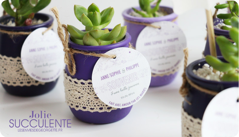 succulentes3