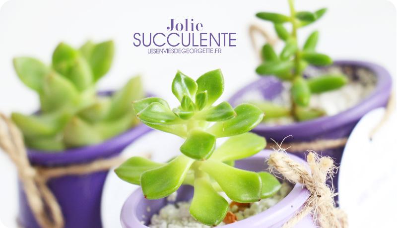 succulentes5