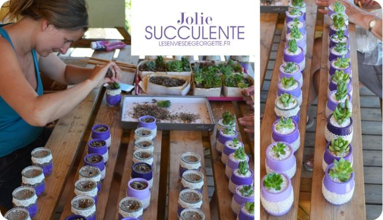 succulentes7