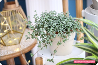 plante_home3