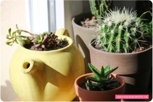 plante_home9