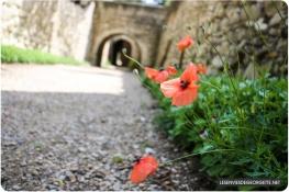 Abbaye_saintandre7
